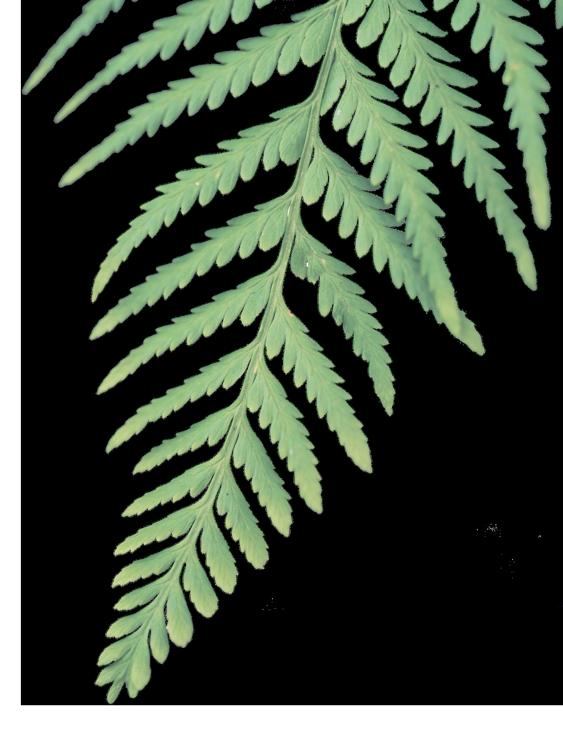 leaf-img